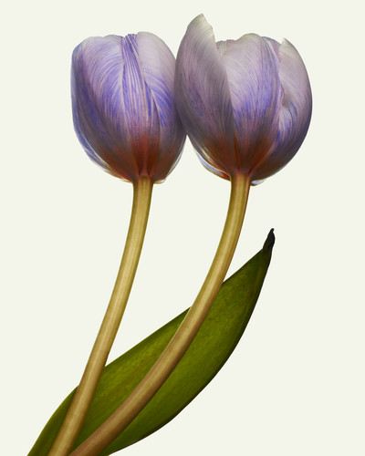 Future Flowers - © Richie Talboy